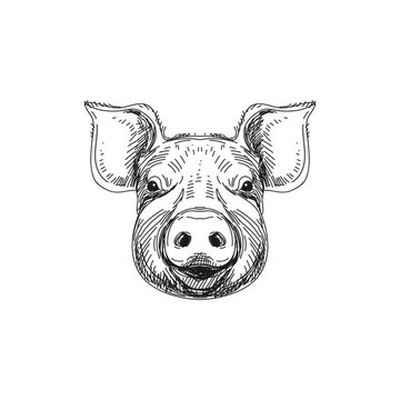 Beautiful vector hand drawn meat products Illustration.