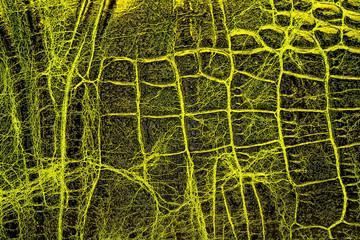 Wall Mural - Yellow crocodile skin texture