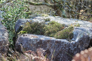 Rock in Snowdonia with moss