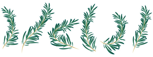 rosemary branch isolated