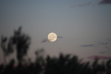 Evening Moon Landscape