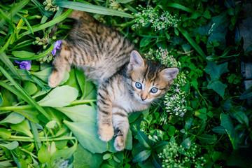 Cute tabby little kitten in the grass