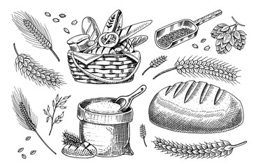 Set of wheat and Cereals. Barley and Malt Rye seeds for making bread, Beer and bakery products. Whole grains,bag of flour and organic farmer oat harvest. Hand drawn Vintage sketch.