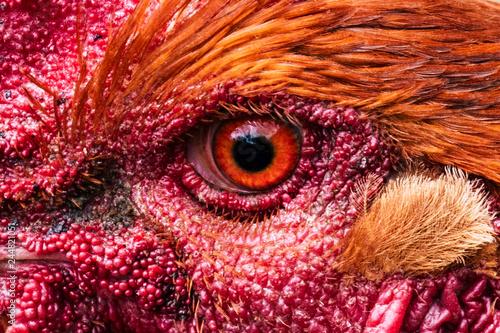 Ojo de gallo imagenes