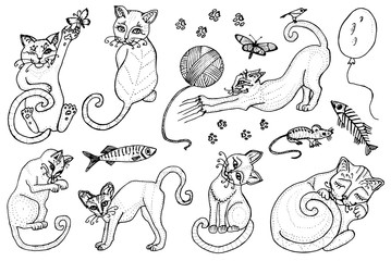Set of cute cats. Kittens collection. Icons of vector Illustration, line art. Hand drawn Pets. Engraved vintage sketch. Decorative Elements. Fish and food and a ball of yarn.