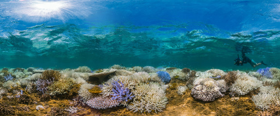 Fluorescing coral reef with photographer
