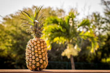 Pineapple at Sunset - Covered in Rays of Sun and Perched on a Ledge, with Palm Trees in the Background, in Hawaii on a Summer Evening