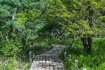 奥日光のハイキングコース