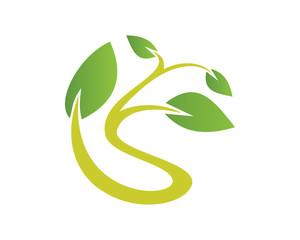 Leaf plant s 1