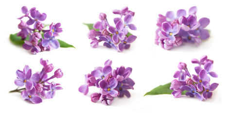 Photo sur Plexiglas Lilac lilac isolated on white background set