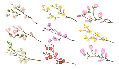 Set of blooming branches of fruit trees. Twigs with flowers and green leaves. Nature theme. Detailed flat vector icons