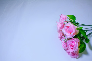 Pink roses on white background photoshoot. Valentine day
