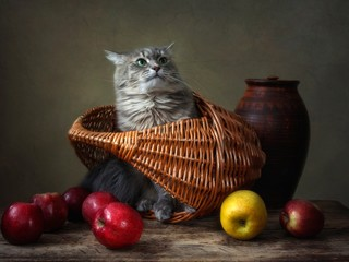 Still life with apples and funny kitty