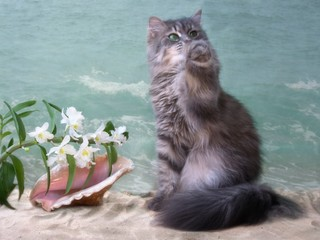Pretty kitty  on the sea beach