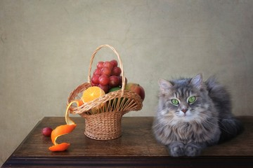 Still life with ripe fruits and pretty kitty