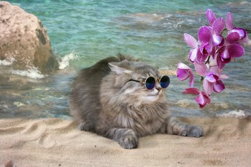 Pretty kitty in the sunglasses on the sea beach