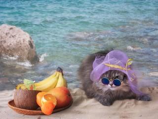 Pretty kitty in the sunglasses on the sea beach