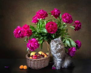 Still life with bouquet of magenta peonies and funny kitty