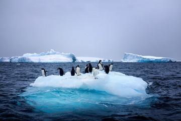 Snow, ice, glaciers, ocean water, clouds and penguins - a typical scene for Antarctica tourism