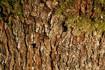 Bark of a tree with moss background