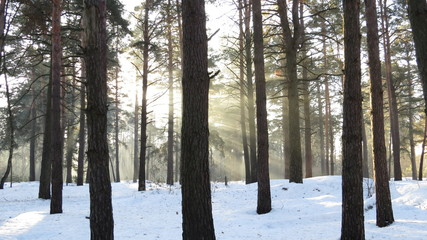 Sunlights in the forest