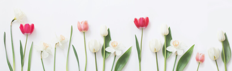 Foto op Canvas Tulp spring flowers on white background