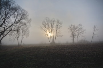 Trees in Bavaria in the mist with the sun in the background