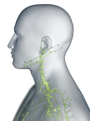 3d rendered medically accurate illustration of the lymphatic system of the neck