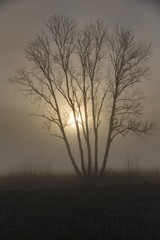 A tree in Bavaria in the mist with the sun in the background