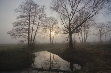 Trees and a small stream in Bavaria in the mist with the sun in the background