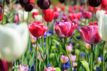 Fotoväggar - Blumenwiese im Frühling