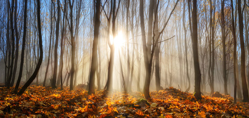 Wall Mural - Forest enchanted by rays of sunlight in winter or autumn