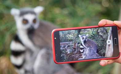 Photographing animals by mobile phone