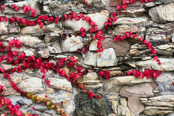 ivy on stone wall, abstract background