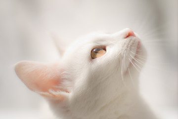 Portrait of a white cat in profile. Looking up. Photo in bright colors.