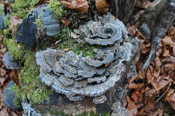 Mushrooms in wood