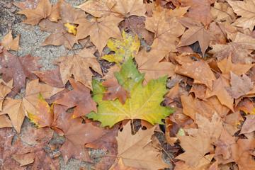 Leaves in the floor