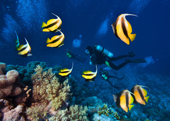 Group of scuba divers explore beautiful coral reef with school of Butterfly Fish.