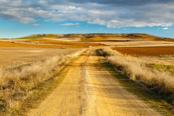 Camino agrario y lomas en la Comarca de Los Oteros.