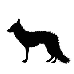 Vector silhouette of fox on white background.