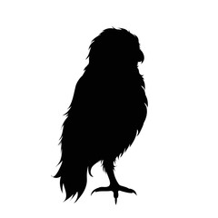 Vector silhouette of owl on white background.