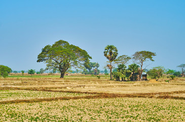 The agrotourism in Myanmar