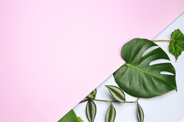Wall Mural - Composition with fresh tropical leaves on color background