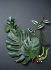 Wall Mural - Composition with fresh tropical leaves on grey background