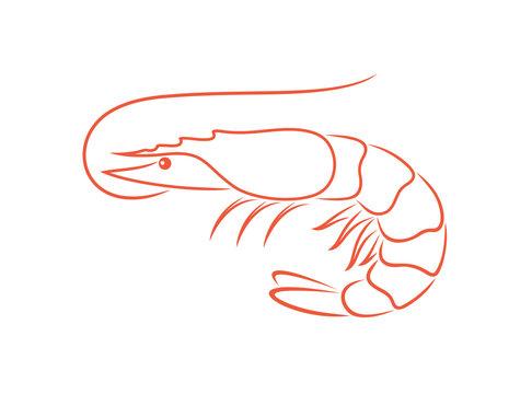 Shrimp outline. Isolated shrimp on white background. Prawns outline