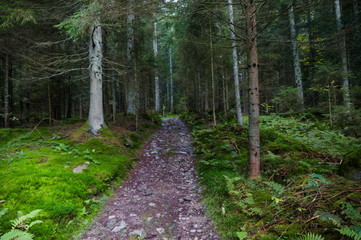 Small walkway through the Bavarian forest
