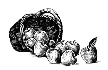basket with apple, hand drawing vector