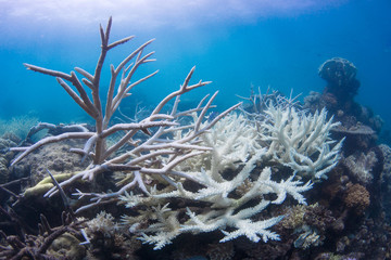 Coral bleaching on reef