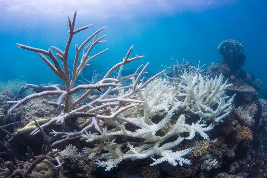 Coral bleaching on reef