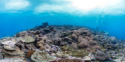 Healthy coral reef in Palmyra panorama